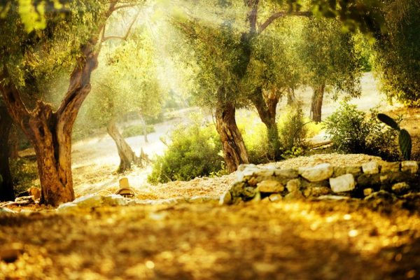 NORSAN-biologisches-Olivenöl-Antioxidan